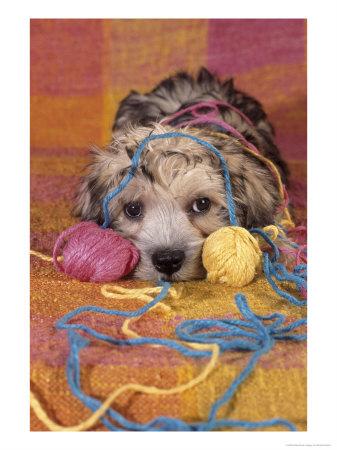 tangled-in-yarn