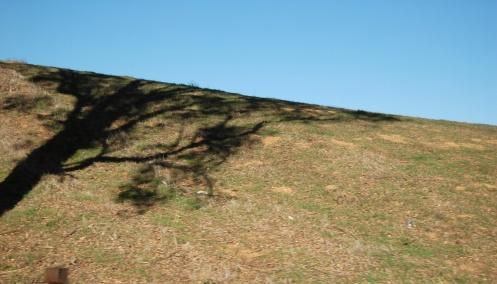 shadowtree1