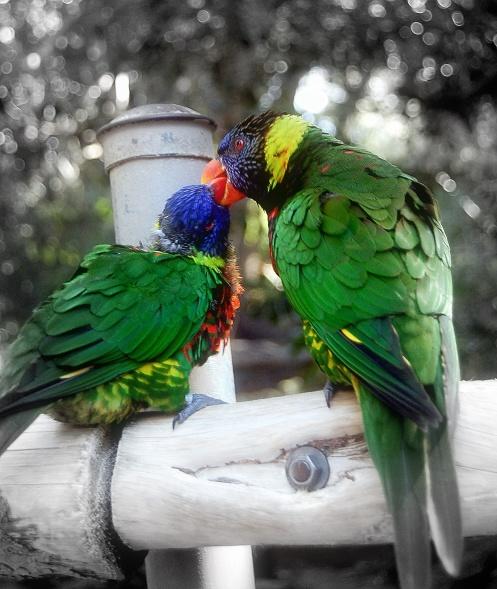 familybirds